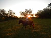 Pantanal - 16 Tage Rundreise Brasilien – Naturwunder in Südamerika
