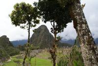 Machu Picchu (17)