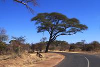 In Afrika angekommen