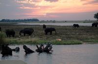 Chobe NP - Sundowner mit Elefant & Co