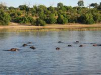Bootsfahrt auf dem Chobe-River - Flusspferde