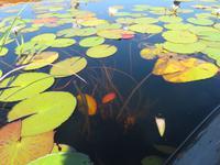 Fahrt mit den Mokoros im Okawango-Delta