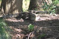 Krokodil beim Sonnenbaden