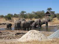 Elefanten-Bad im Elephant Sands Resort