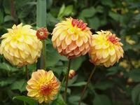 Ausflug nach Vancouver Island - Butchart Gardens