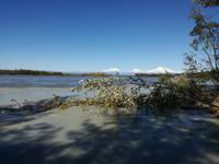 Fahrt nach Anchorage - Mount Denali