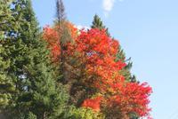Herbststimmung am Algonquin River