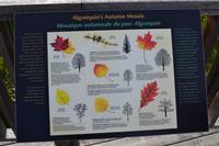 Erklärung der Laubfärbung im Herbst