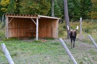 Moose im Parc Oméga
