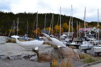 Walforschungsstation in Tadoussac
