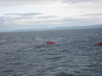 Whale Watching auf dem St.-Lorenz-Strom