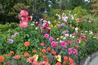 Butchart Garden5