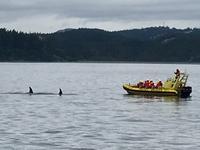 Mutter und Kind Orca