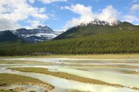 Panoramafahrt entlang des Icefield Parkway