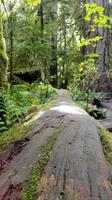 MacMillan Provincial Park - Cathedrale Grove - Vancouver Island