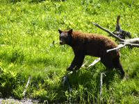 039 Omega Wildlife Parc