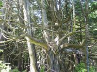 194 Vancouver Island - Rund um Tofino