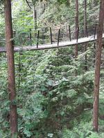 238 Vancouver - Capilano Suspension Bridge