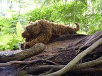 104 Vancouver Island - Butchart Garden