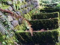 Treppe im Regenwald