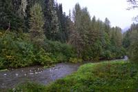 Erste Bärenbeobachtung am Fish Creek