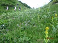 Besuch des Alpengartens auf der Schynige Platte