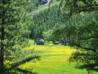 Zermatt, Wanderung nach Zmutt und Furi