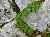 Vegetation auf der Schwägalp
