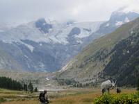 0064 Glacier-Bernina-Express- Kutschfahrt ins Val Roseg - Blick zum Roseg-Gletscher