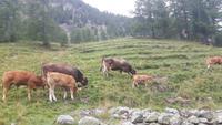 Kutschfahrt ins Val Roseg