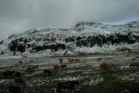 Auf dem Weg zum Berninapass