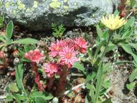 Das Rosegtal ist bekannt für seine vielfältige Flora
