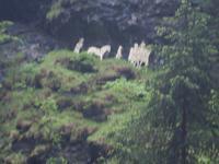 Saumweg Via Mala