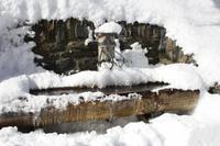 alter Brunnen in Mürren