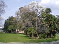 Stadtpark in Lugano