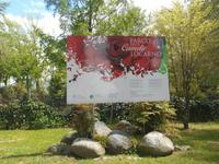Kamelienpark in Locarno