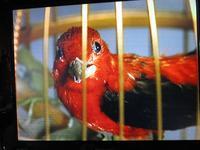Uhrenmuseum. Vogelautomaten