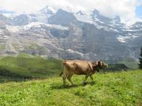 Ausflug zum Jungfraujoch -