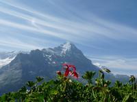 Blick vom First zur Eigernordwand