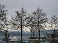 Der Blick auf den Zürichsee