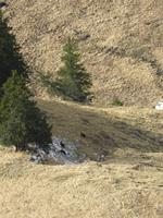 287 Silvester im Berner Oberland - Ausflug nach Grindelwald - auf dem First - Gämsen