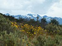 Feuerland Nationalpark Ushuaia