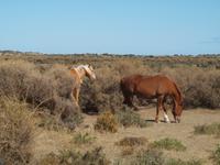Puerto Madryn - Halbinsel Valdes