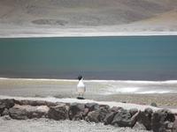 Lagunen Miniques und Miscanti