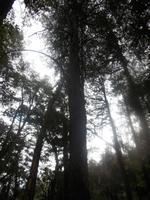 Reserva Biologica Huilo Huilo