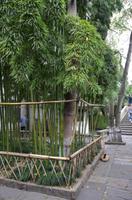 Bambus in Wuzhen