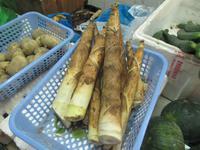 Bambussprossen