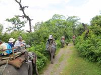 1504  Chitwan-Nationalpark - Elefanten-Safari