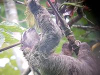 17 Tage Rundreise Costa Rica – einzigartige Naturreise San José – Vulkane Poas & Arenal – Braulio Carrillo NP – Cahuita NP – Tortuguero NP – Monteverde – Santa Elena – Carara NP – Marino Ballen (291)