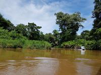 17 Tage Rundreise Costa Rica – einzigartige Naturreise San José – Vulkane Poas & Arenal – Braulio Carrillo NP – Cahuita NP – Tortuguero NP – Monteverde – Santa Elena – Carara NP – Marino Ballen (491)